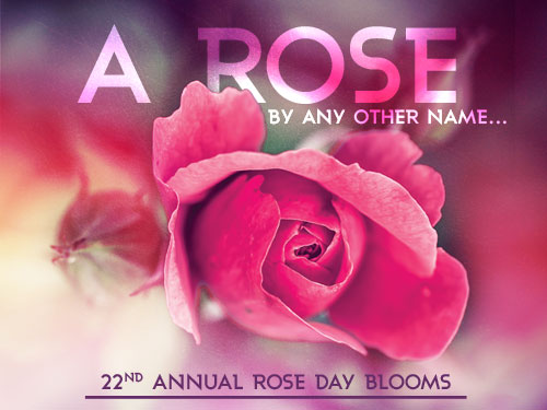 A rose by any other name… 22nd annual Rose Day blooms