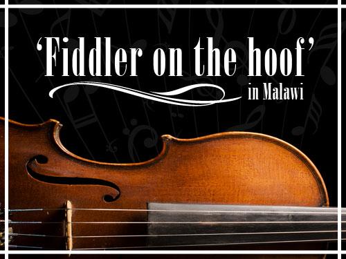 'Fiddler on the hoof' in Malawi