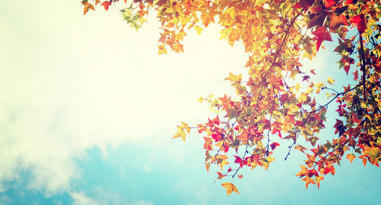 Fun fall festivities flourish at Falls Creek & CrossTimbers