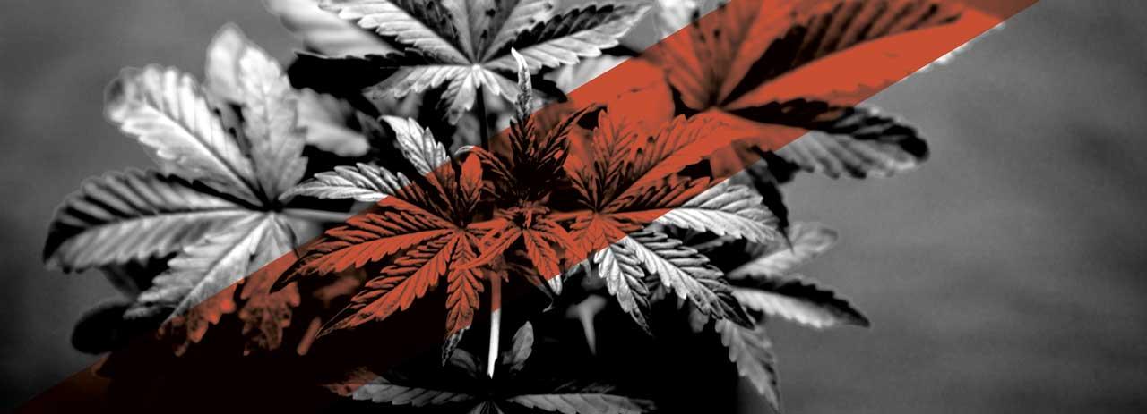 Saying no: Opponents of SQ 788 'medical marijuana' speak up ahead of June 26 vote