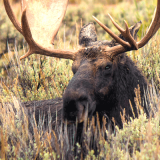 Rite of passage: Foods that would choke a moose