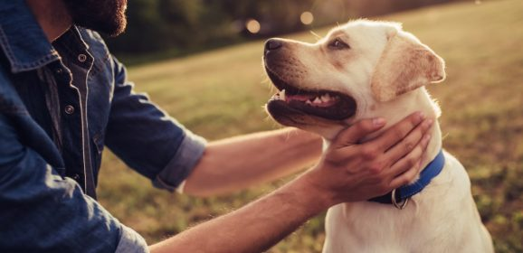 Dogs: The evangelism tool you didn't know you had