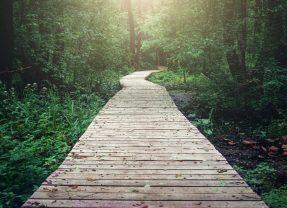 Disciple-making pathways