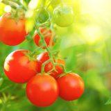 BLOG: God Himself Planted a Garden