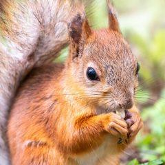 Rite of passage: Squirrel problems