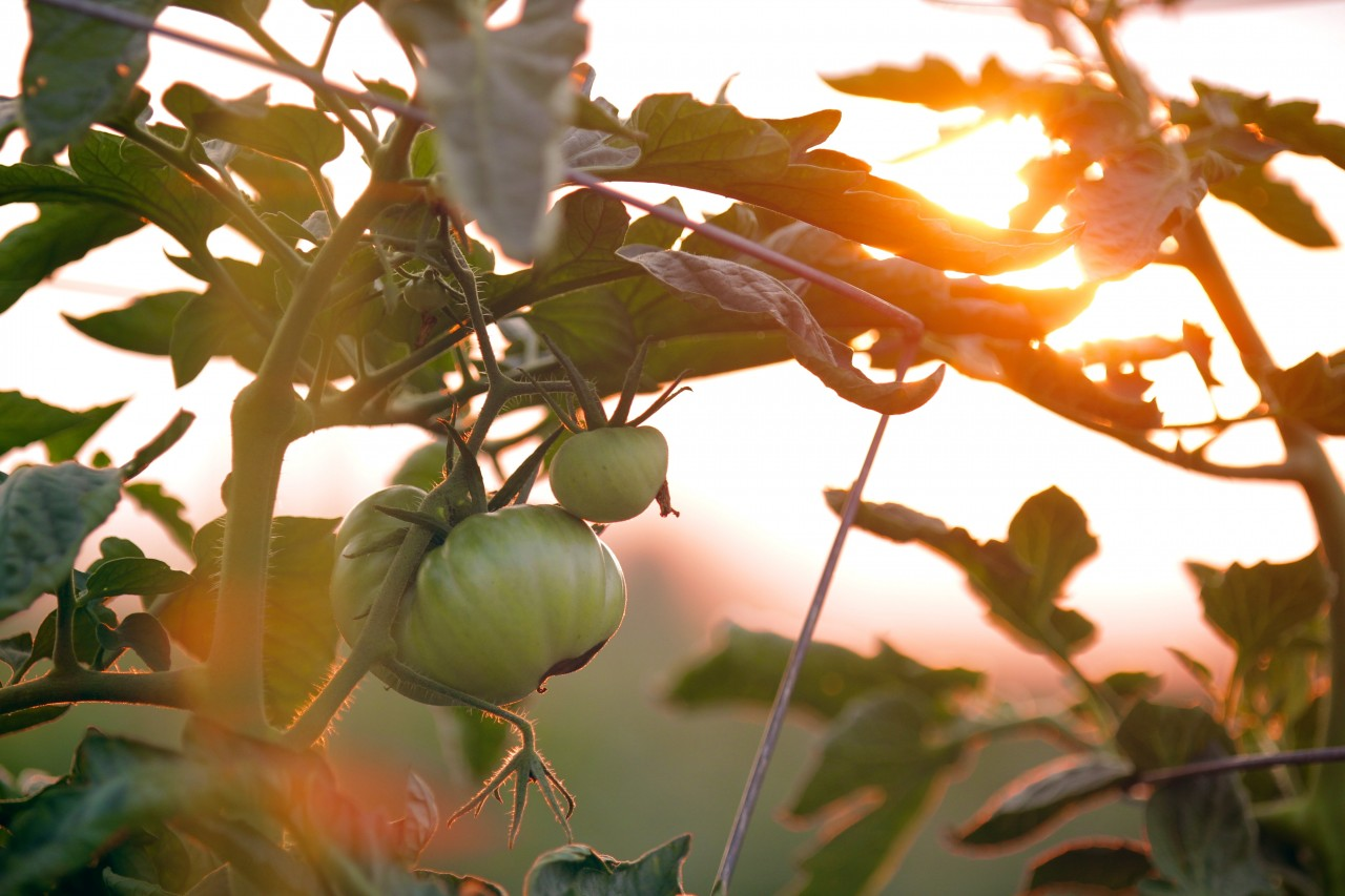 BLOG: Sustainable Gardening & The Ultimate Sustainer