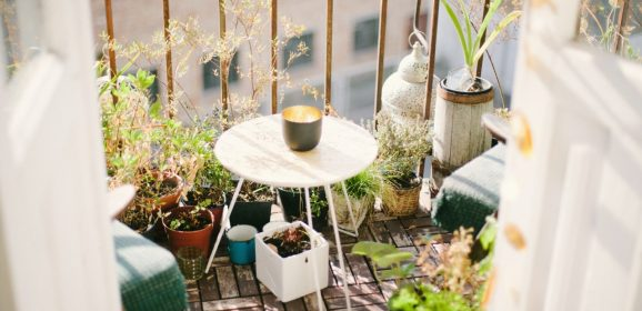 BLOG: Create your own morning garden