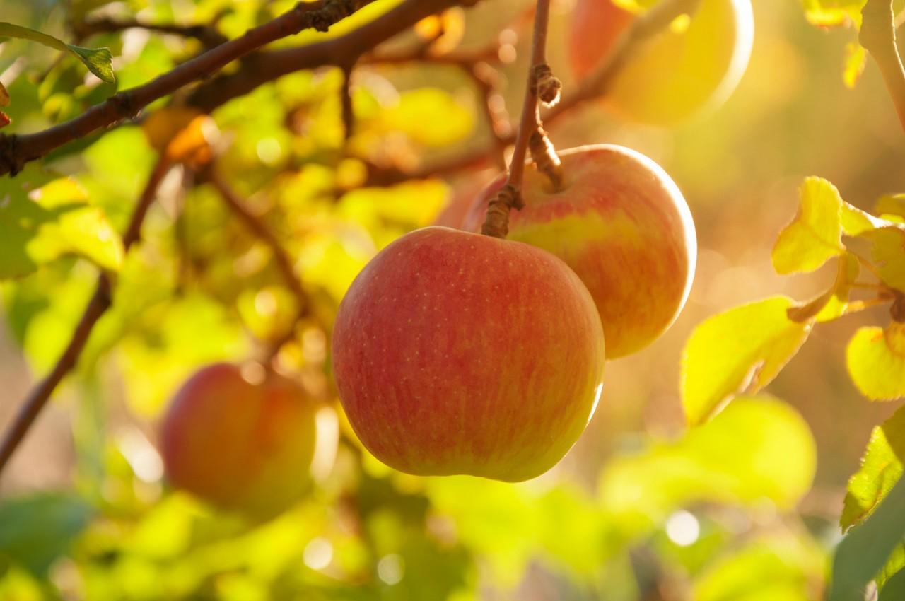 BLOG: Vine ripened but not always on the vine