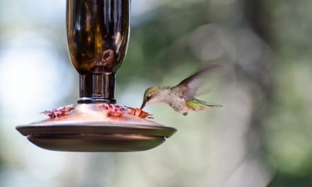 Rite of Passage: The hawk and the hummingbird