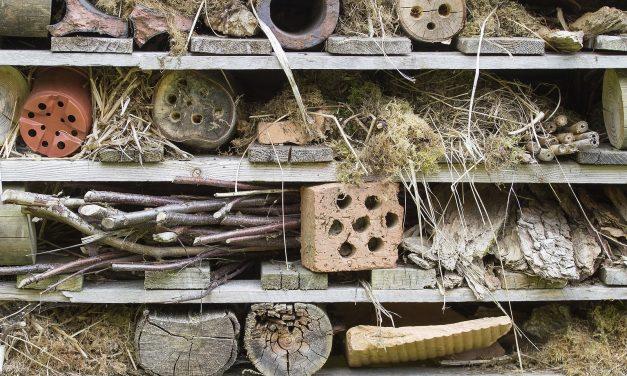 BLOG: Preparing a home