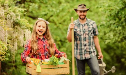 Blog: 6 tips to affordable gardening