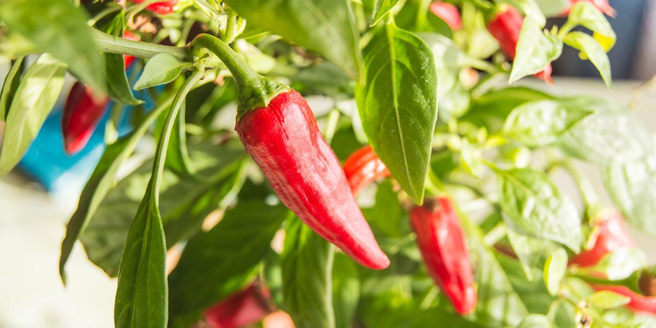 BLOG: 5 easy vegetables to grow for beginning gardeners