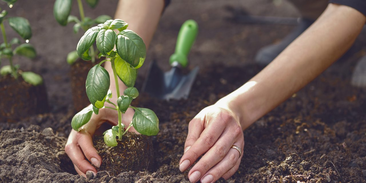 Blog: Secrets to successfully growing herbs (part 1)