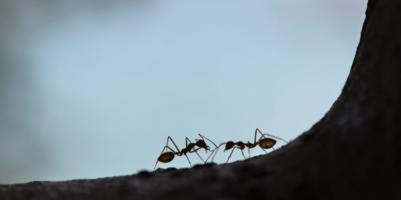 BLOG: Go to the ant