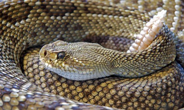 Just Joe: A snake tale